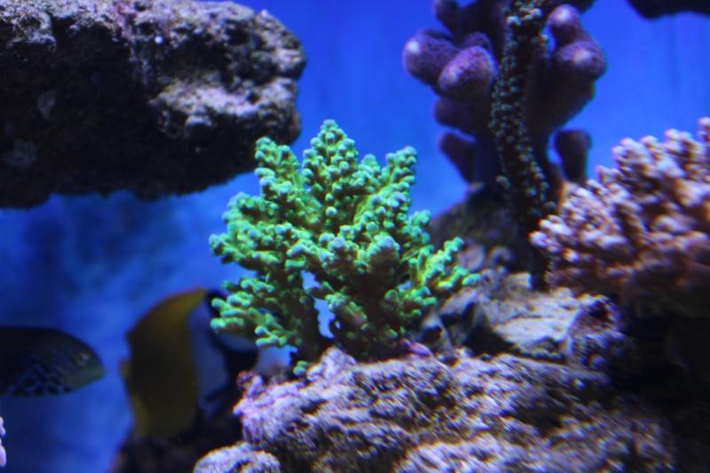 Le nouveau Reef d'Alexpilon, 600l custom - Page 5 Img_6718