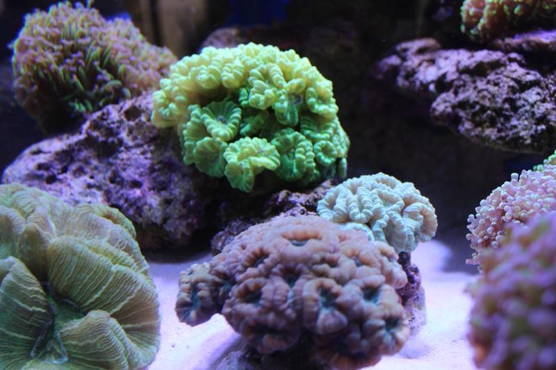 Le nouveau Reef d'Alexpilon, 600l custom - Page 5 Img_6720