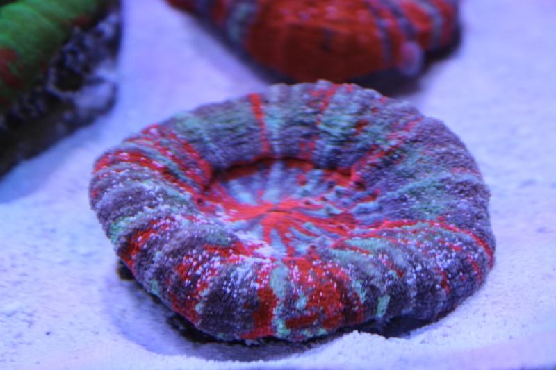 Le nouveau Reef d'Alexpilon, 600l custom - Page 5 Img_6723
