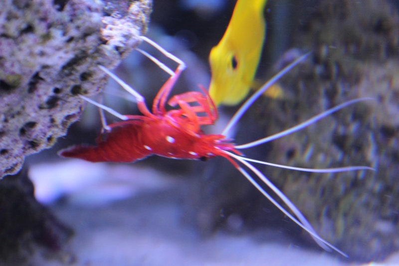 Le nouveau Reef d'Alexpilon, 600l custom - Page 5 Img_6725