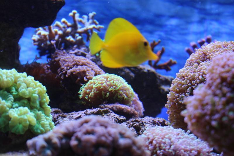 Le nouveau Reef d'Alexpilon, 600l custom - Page 5 Img_6729
