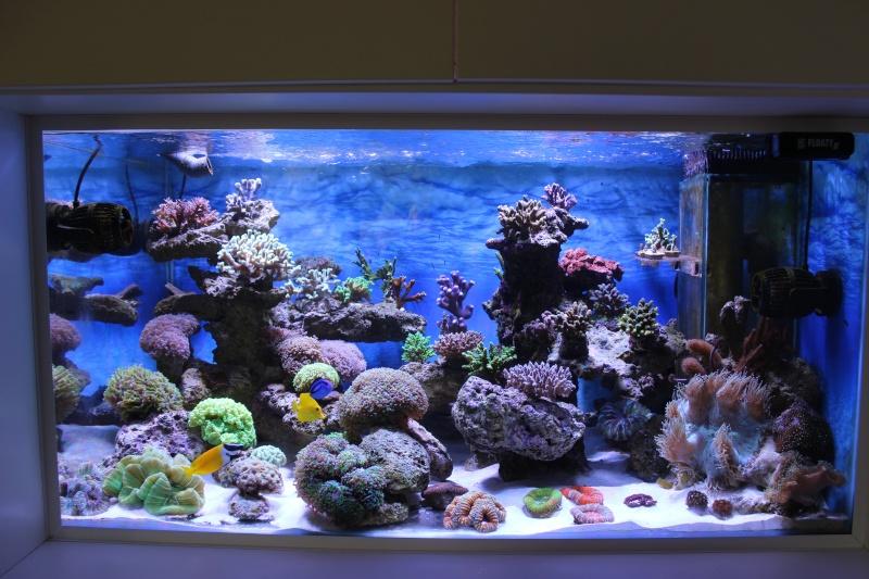 Le nouveau Reef d'Alexpilon, 600l custom - Page 5 Img_6811