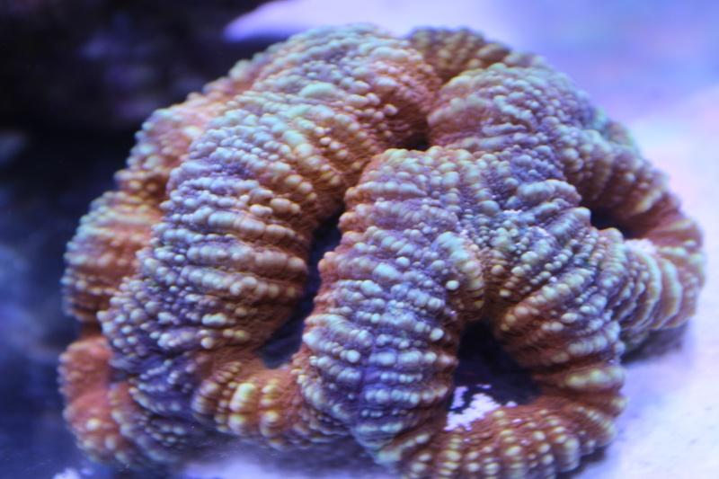 Le nouveau Reef d'Alexpilon, 600l custom - Page 5 Img_6812