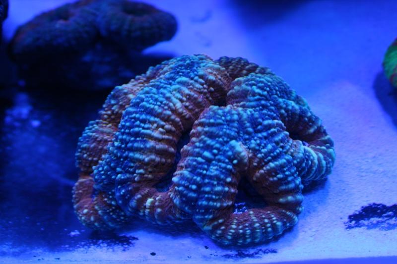 Le nouveau Reef d'Alexpilon, 600l custom - Page 5 Img_6813