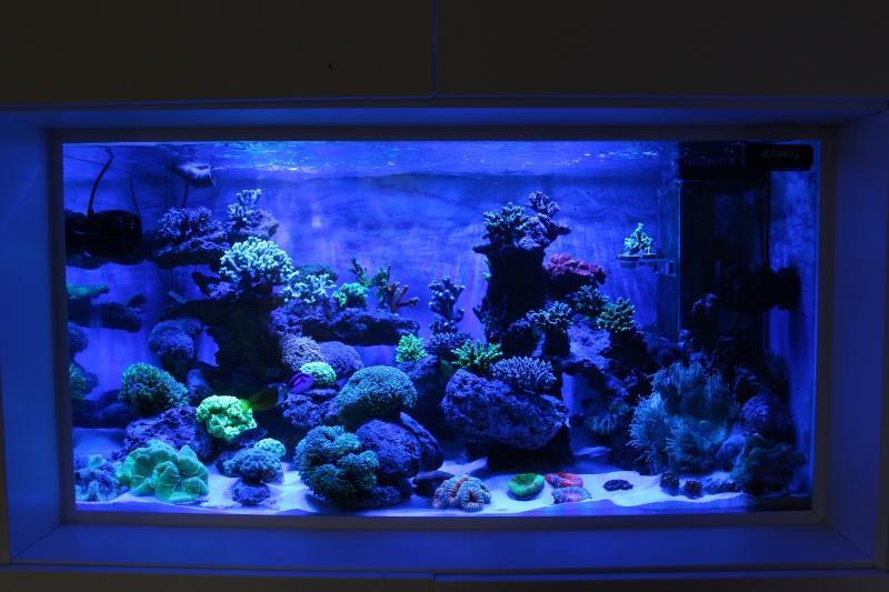 Le nouveau Reef d'Alexpilon, 600l custom - Page 5 Img_6814