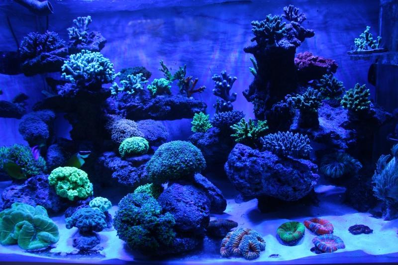 Le nouveau Reef d'Alexpilon, 600l custom - Page 5 Img_6815
