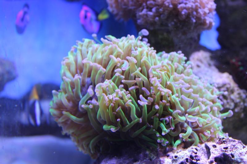 Le nouveau Reef d'Alexpilon, 600l custom - Page 5 Img_6816