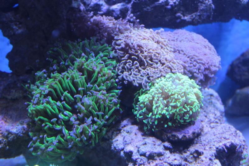 Le nouveau Reef d'Alexpilon, 600l custom - Page 6 Img_6818