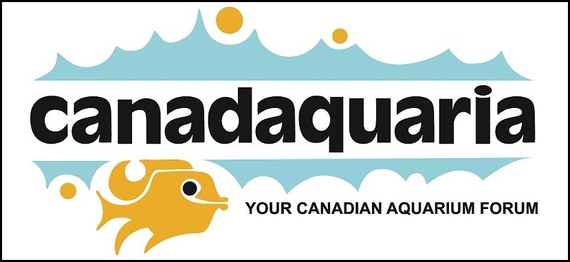 Aquascape DOES make a difference in fish colors! Canada19