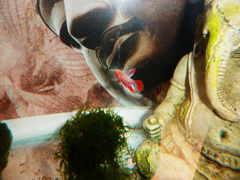 Male OHM BE marbré + femelle HM métalique cambodge  - Page 3 P6110014