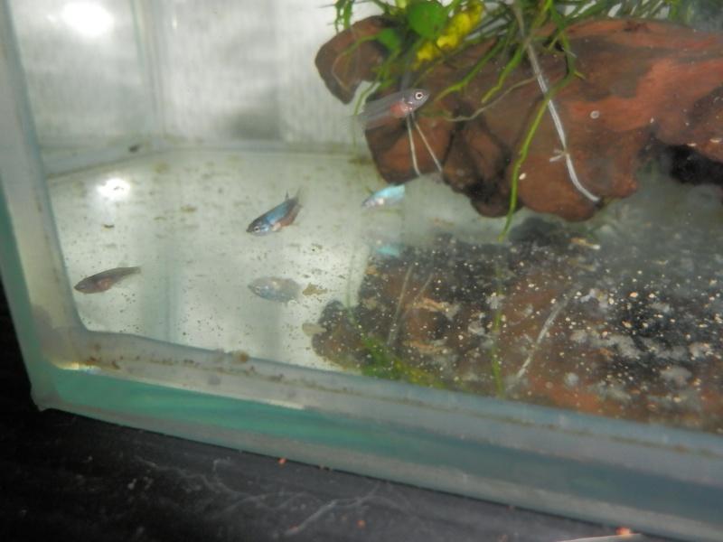 Male marbré + femelle marbré  Pa030018
