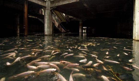 Les insolites et autres bizarreries de l'autre Monde Fish_a10