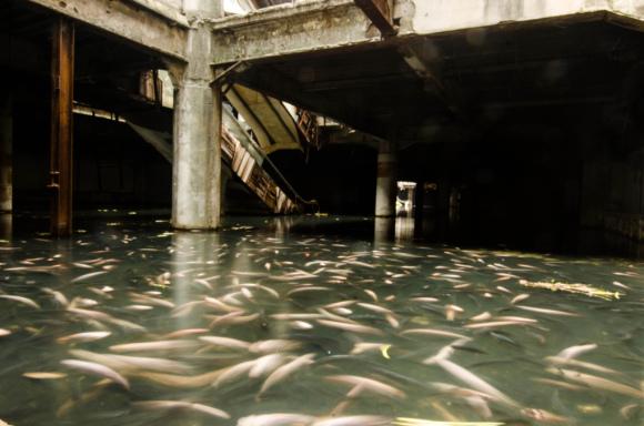 Les insolites et autres bizarreries de l'autre Monde Fish_b10