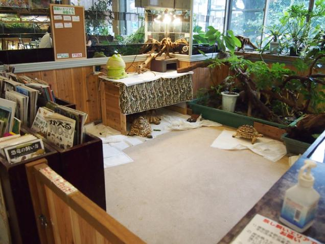 Les images et vidéos insolides Made in Japan - Page 2 Reptil10