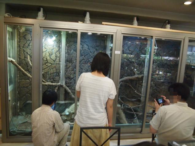 Les images et vidéos insolides Made in Japan - Page 2 Reptil11