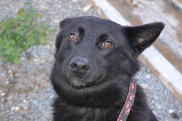 KRISTOFF, magnifique chien, robe noire, 1 an Kristo13