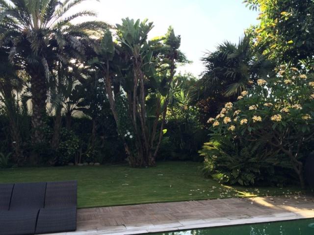 Mon jardin tropical a Casablanca 010