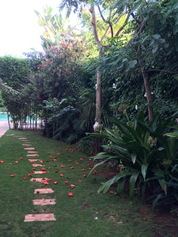 Mon jardin tropical a Casablanca 1010