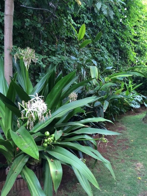 Mon jardin tropical a Casablanca 1110