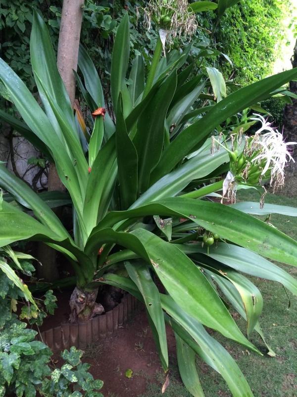 Mon jardin tropical a Casablanca 1210