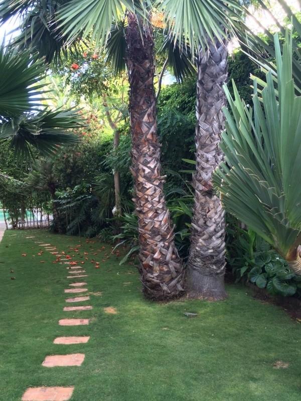 Mon jardin tropical a Casablanca 1310