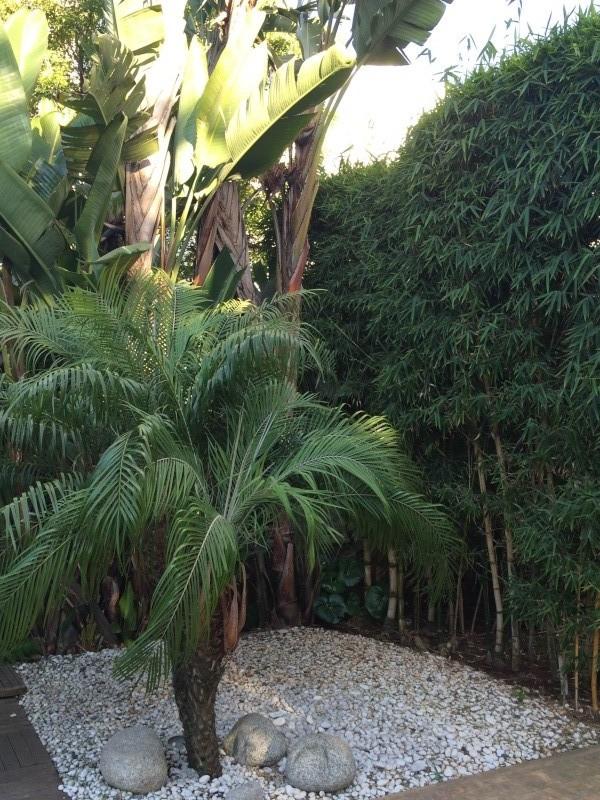 Mon jardin tropical a Casablanca 1410