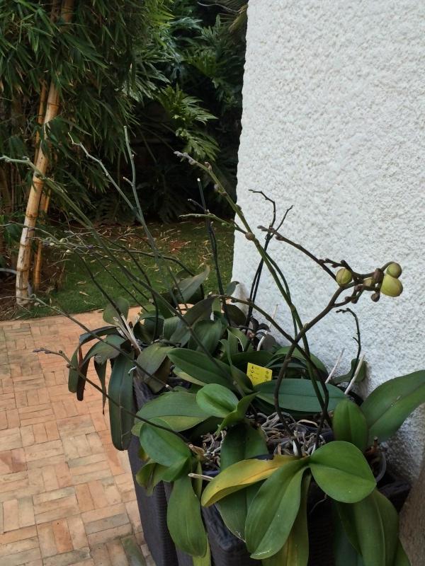 Mon jardin tropical a Casablanca 1510
