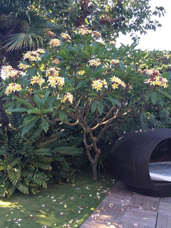 Mon jardin tropical a Casablanca 510