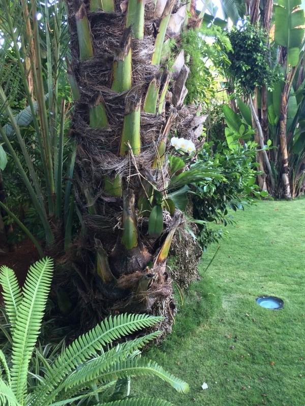 Mon jardin tropical a Casablanca 711