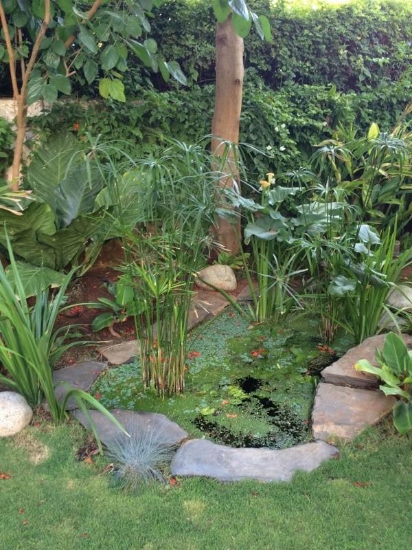 Mon jardin tropical a Casablanca 811