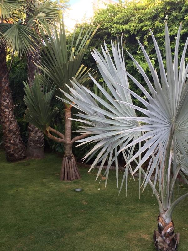 Mon jardin tropical a Casablanca 910