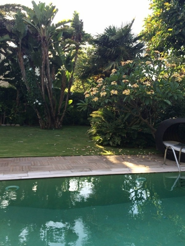 Mon jardin tropical a Casablanca J21110