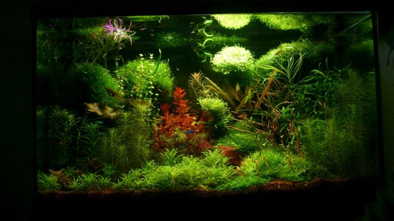 aquarium 54litres planté - Page 5 04113