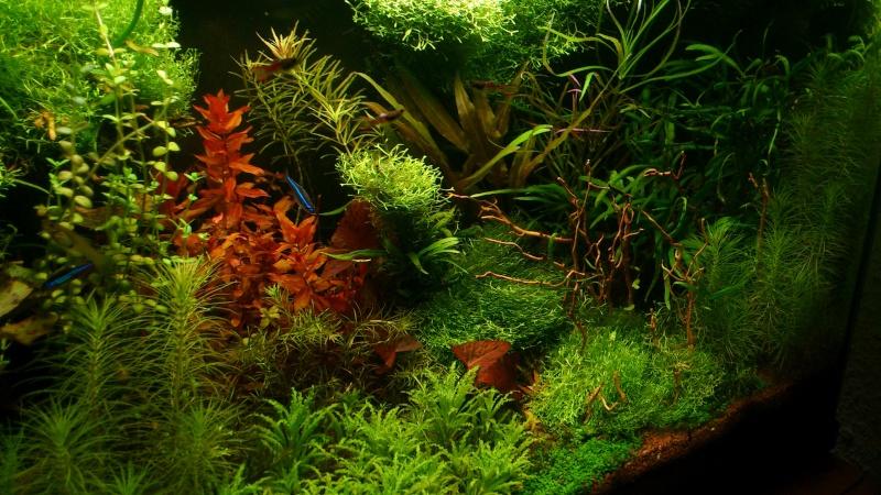 aquarium 54litres planté - Page 5 05410
