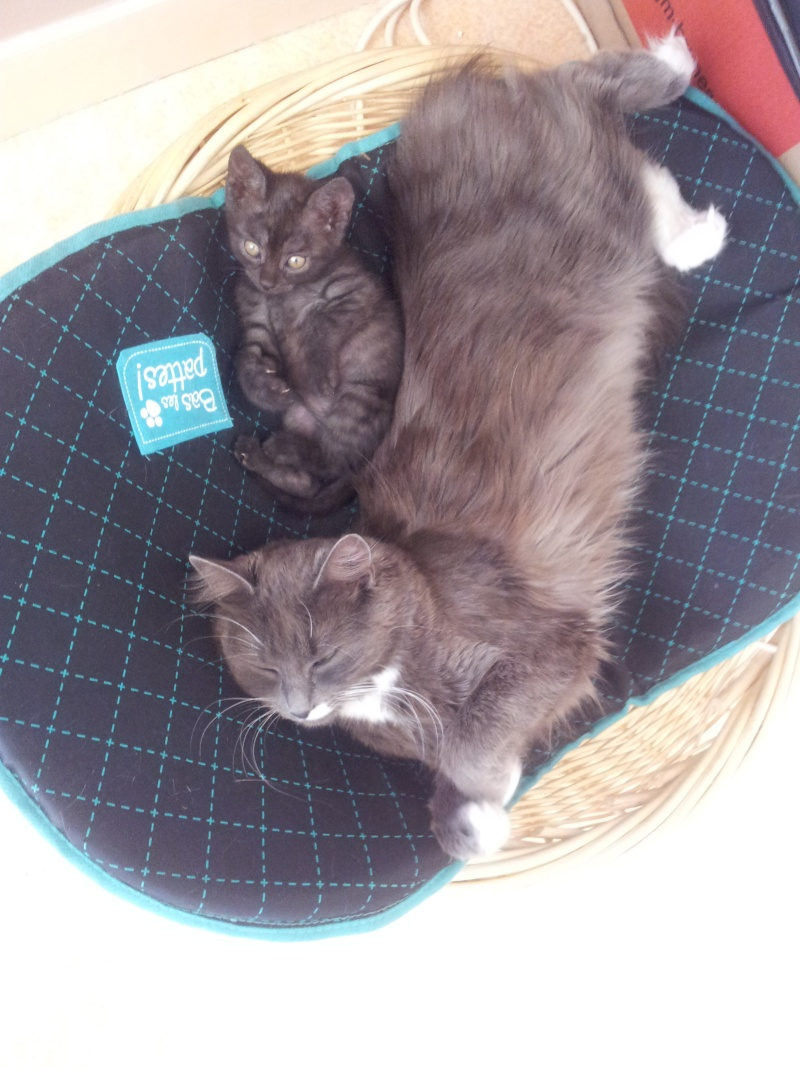 Nos amis les bêtes  2012-011
