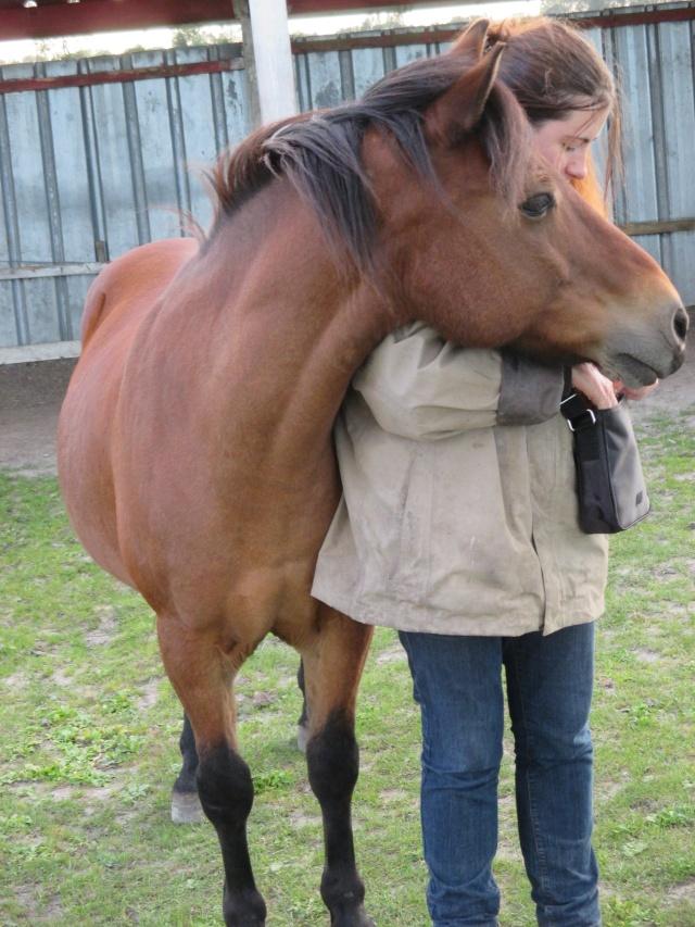 LEON - ONC poney né en 2000 - adopté en mars 2014 par Bilby - Page 3 Img_0712