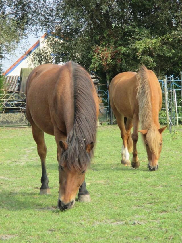 LEON - ONC poney né en 2000 - adopté en mars 2014 par Bilby - Page 3 Img_0912