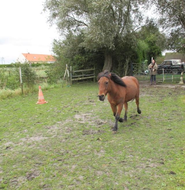 LEON - ONC poney né en 2000 - adopté en mars 2014 par Bilby - Page 3 Img_1410