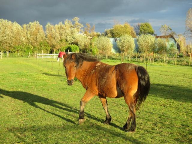 LEON - ONC poney né en 2000 - adopté en mars 2014 par Bilby - Page 3 Img_1610