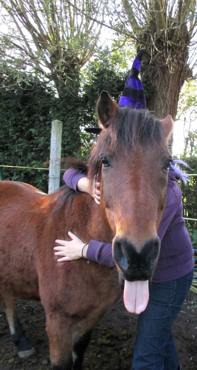 LEON - ONC poney né en 2000 - adopté en mars 2014 par Bilby - Page 3 Img_2113
