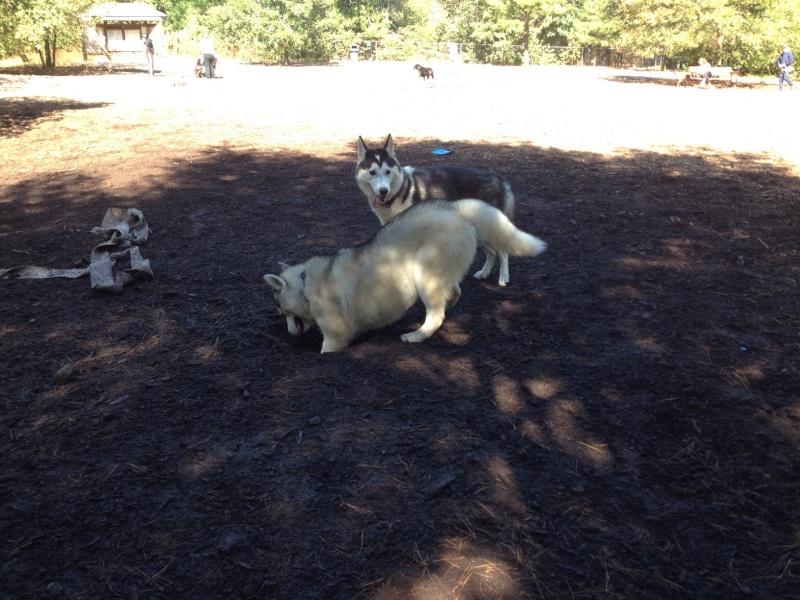 Layla and Dizzy meet in Massachusetts! Img_1019