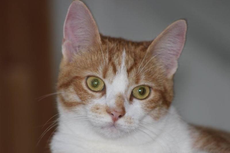 Joy - Petite Louloute rousse et blanche Adoptée 10112010