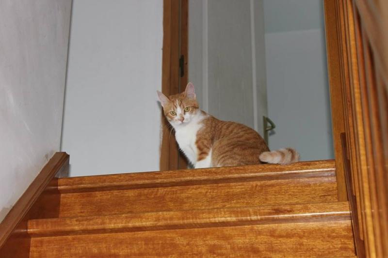 Joy - Petite Louloute rousse et blanche Adoptée 10553510