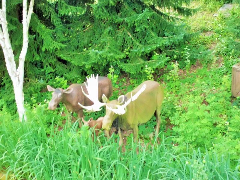 TR Séjour Mère-Fille au Séquoia Lodge  15_18 juillet 2014 Cimg0053