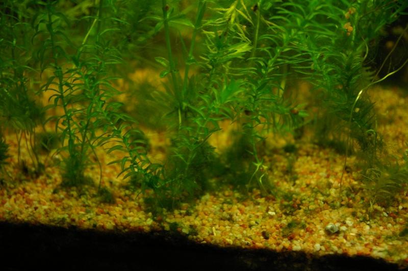 Mon premier 120L et aquarium enfin presque :) Invasi10