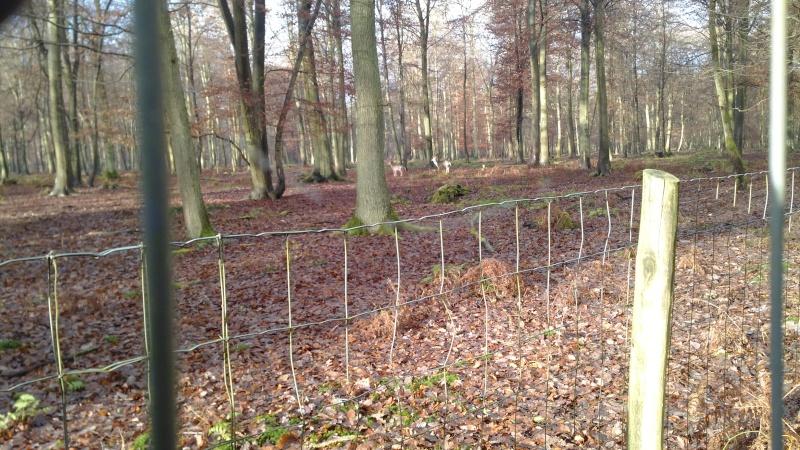 [16 Nov. 2014] Sortie forêt de Roumare 8 h 30 Parc Animalier - Page 2 Img_2076