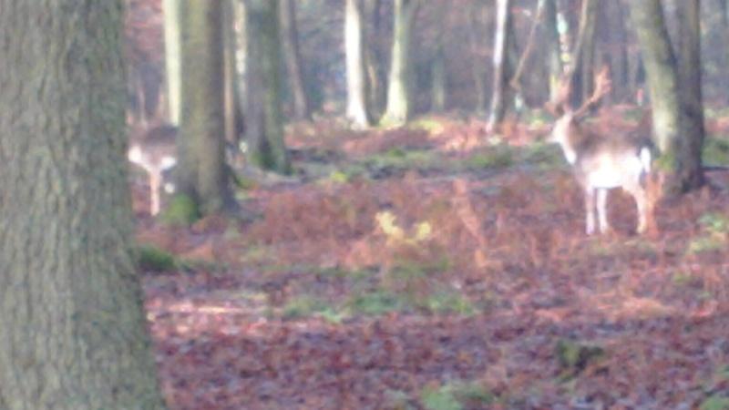 [16 Nov. 2014] Sortie forêt de Roumare 8 h 30 Parc Animalier - Page 2 Img_2077