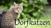 Dorfkatzen Banner17