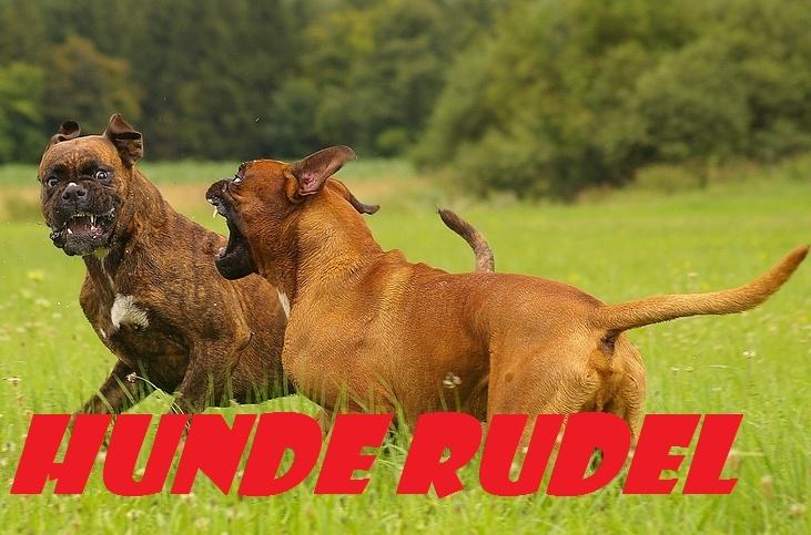 Hunde Rudel