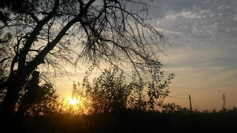 Motiv fotografiranja: sunce (izlazak sunca, zalazak sunca...) - Page 6 20140835